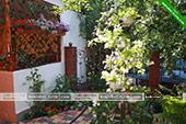 Цветы - гостевой дом Грация Мичурина 7 в Коктебеле - Феодосия