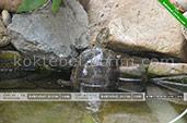Черепаха - Гостевой дом Kite Home в Коктебеле - Крым
