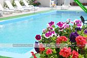 Цветы у бассейна -  отель Коктевилль в Коктебеле - Крым.