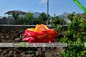 Цветок - Пансионат Эдельвейс в Коктебеле, Феодосия