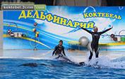 Дельфинарий в поселке