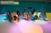 Шоу в дельфинарии