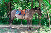 Конные прогулки - Коктебель - Шах-Мурза в Старом Крыму